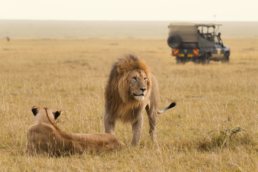 Lion-Africa-Safari-Vehilce